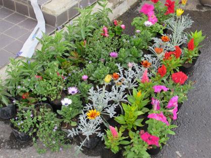 花いっぱい運動 花プランター設置