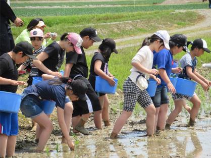 峰延小学校・南美唄小学校合同 田植体験に参加しました。