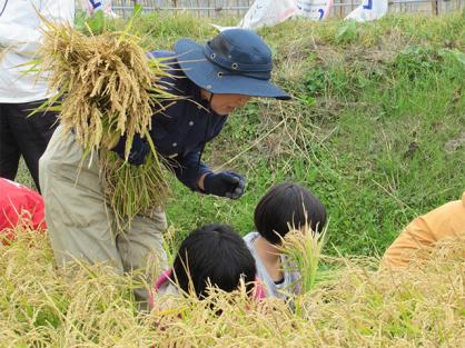 コープさっぽろ稲刈り体験のお手伝いに参加しました。