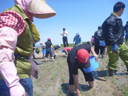 食育事業 「田植え農業体験」